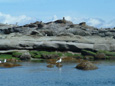 Sightseeing eco tours by boat, watch sea lions, whales, eagles, more on Vancouver Island, BC